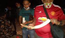 Subdit Tipidter Dit Reskrimsus Polda Lampung Bersama TNBBS Berhasil Amankann 3 (Tiga) Orang Pelaku Penjualan Gading Gajah